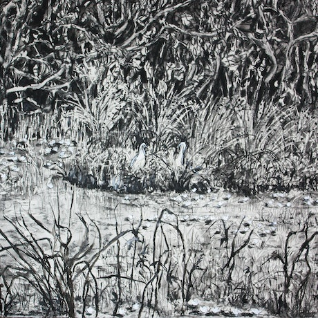 (CreativeWork) Noosaville Wetlands by jane parker. Drawings. Shop online at Bluethumb.