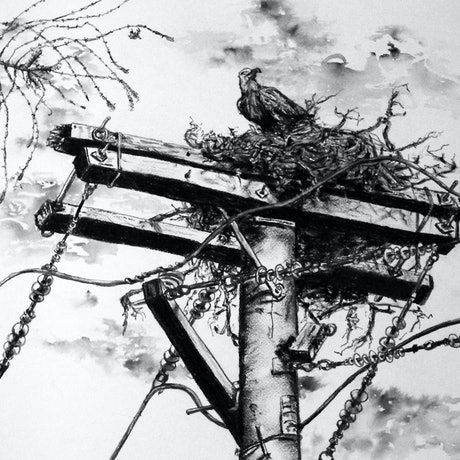 (CreativeWork) Suburban Eagle Ed. 3 of 100 by jane parker. Reproduction Print. Shop online at Bluethumb.