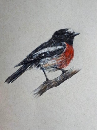 (CreativeWork) Scarlet Robin 1 by Victoria ter Kuile. Drawings. Shop online at Bluethumb.