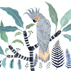 (CreativeWork) Yellow Tailed Grey Cockatoo, Frangipani and Ferns Ed. 27 of 50 by Sally Browne. print. Shop online at Bluethumb.