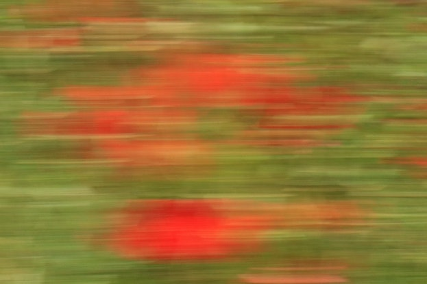 (CreativeWork) Field of Poppies  1  by Aileen Newell. Photograph. Shop online at Bluethumb.