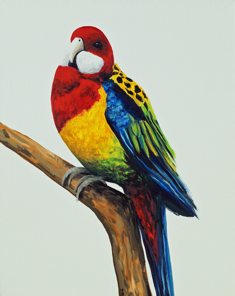 (CreativeWork) Bird Series - Rosella by Tank .. Acrylic Paint. Shop online at Bluethumb.