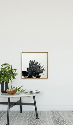 (CreativeWork) Protea by Jacquie Hughes. #<Filter:0x0000559a313a6cb0>. Shop online at Bluethumb.