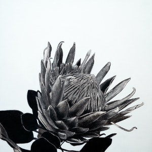 (CreativeWork) Protea by Jacquie Hughes. #<Filter:0x00007f445917f210>. Shop online at Bluethumb.