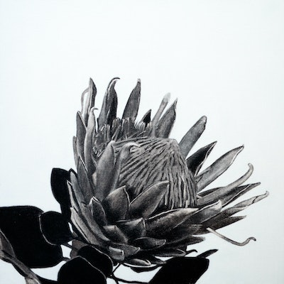 (CreativeWork) Protea by Jacquie Hughes. drawing. Shop online at Bluethumb.