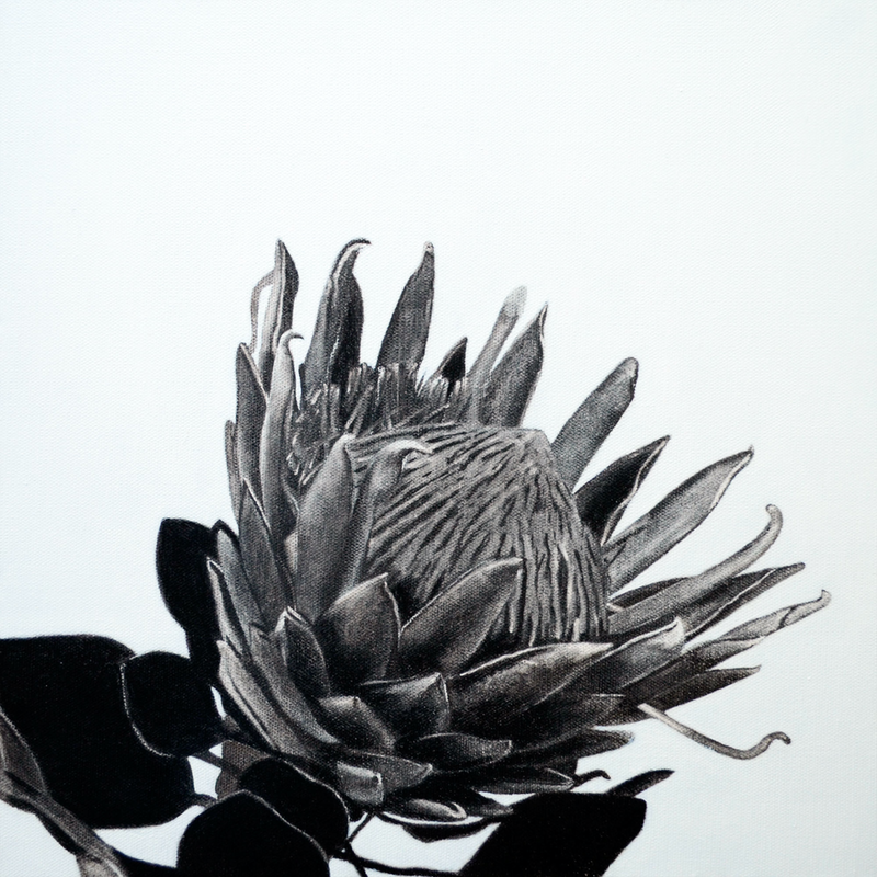 (CreativeWork) Protea by Jacquie Hughes. Drawings. Shop online at Bluethumb.