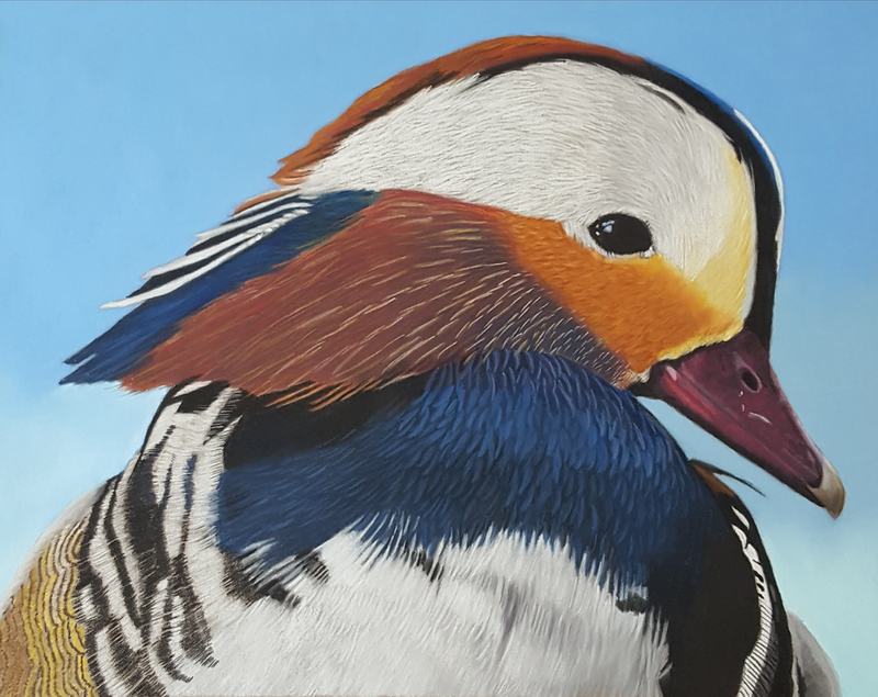 (CreativeWork) Mandarin Duck by Suzanne Perez. Other Media. Shop online at Bluethumb.