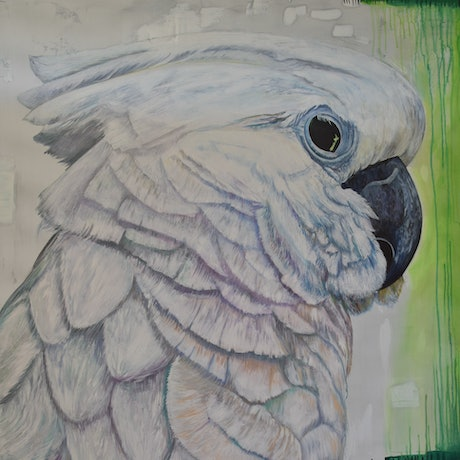 (CreativeWork) Cockatoo with eye on NZ by Robert Paul. Oil Paint. Shop online at Bluethumb.