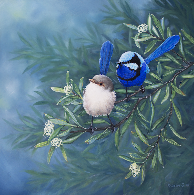 (CreativeWork) Splendid Fairy-wrens by Katherine Castle. Oil Paint. Shop online at Bluethumb.