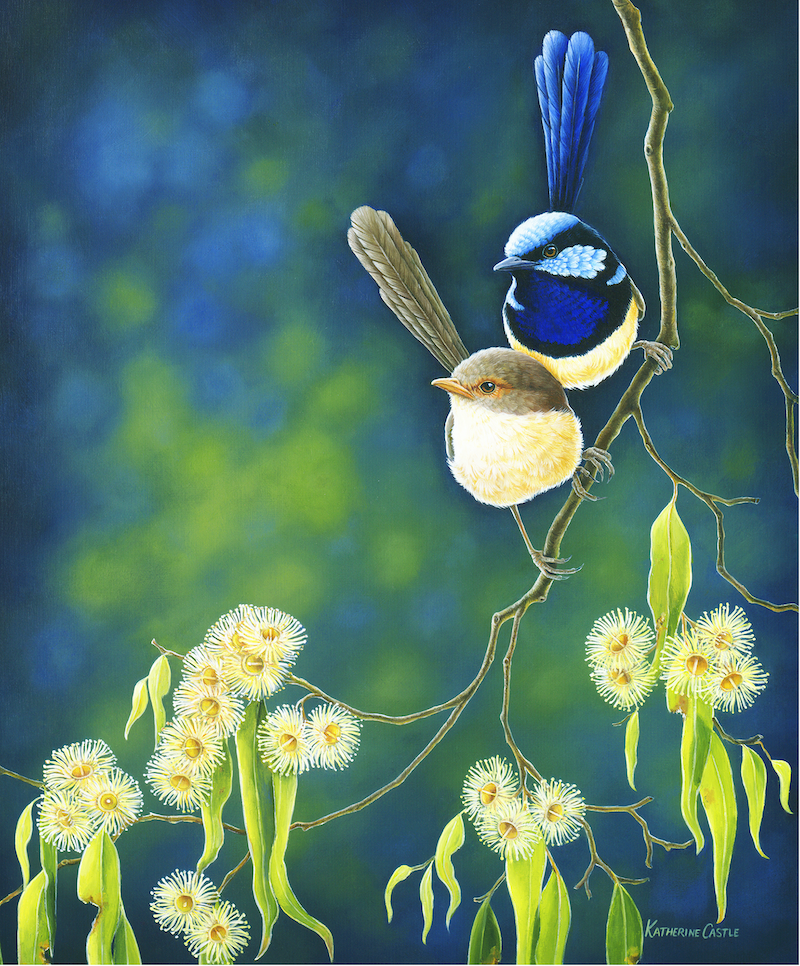 (CreativeWork) The Protector - Superb Fairy-wrens Ed. 27 of 50 by Katherine Castle. Print. Shop online at Bluethumb.