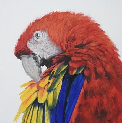 (CreativeWork) scarlet macaw by Naomi Veitch. Acrylic Paint. Shop online at Bluethumb.