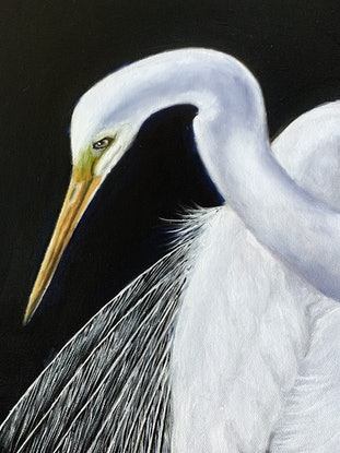 (CreativeWork) Great Egret in Breeding Plumage by Wendy A. Greenwood. Oil Paint. Shop online at Bluethumb.