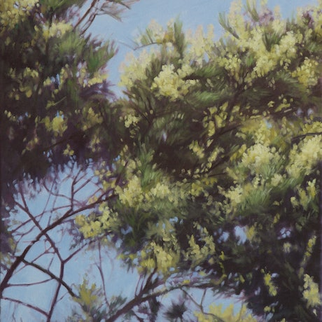 (CreativeWork) RAAF Carpark Wattle by Stephen Travers. Oil Paint. Shop online at Bluethumb.