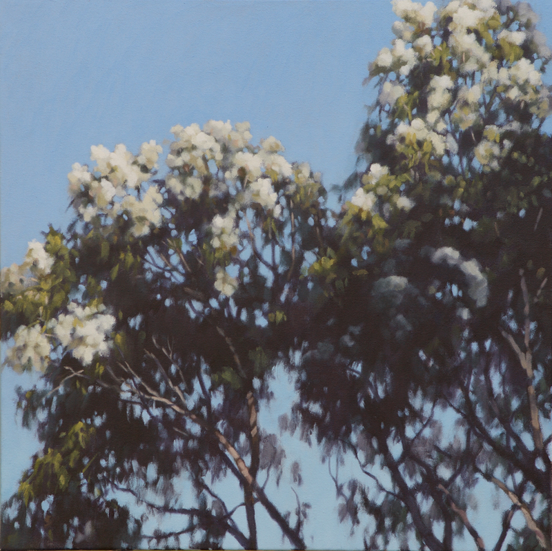 (CreativeWork) First Light, White Gum Blossom by Stephen Travers. Oil Paint. Shop online at Bluethumb.