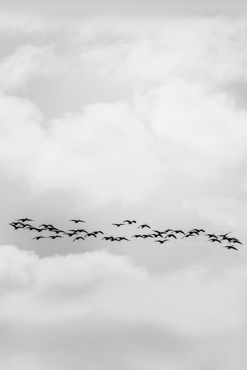 (CreativeWork) Line of birds by Wendy Philip. photograph. Shop online at Bluethumb.