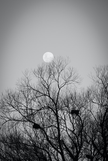 (CreativeWork) Moon rise above the nests by Wendy Philip. photograph. Shop online at Bluethumb.