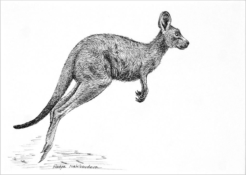 (CreativeWork) Jump for Joy - Young Kangaroo pen & ink drawing by Nadya Neklioudova. Drawings. Shop online at Bluethumb.