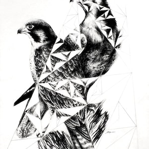 (CreativeWork) Peregrine Truss - Framed, ready to hang  by Jahne Meyer. drawing. Shop online at Bluethumb.