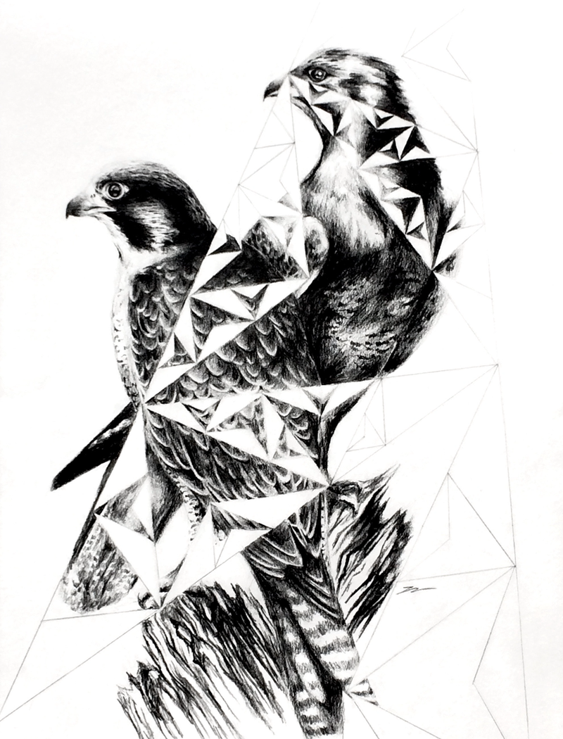 (CreativeWork) Peregrine Truss - Framed, ready to hang  by Jahne Meyer. Drawings. Shop online at Bluethumb.