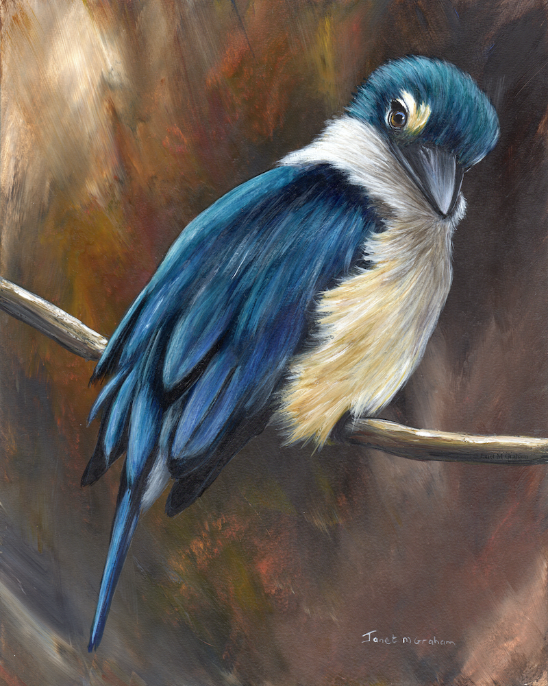 (CreativeWork) Sacred Kingfisher by Janet Graham. Acrylic Paint. Shop online at Bluethumb.