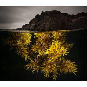 (CreativeWork) A Splash of Yellow Ed. 14 of 100 by Matty Smith. photograph. Shop online at Bluethumb.