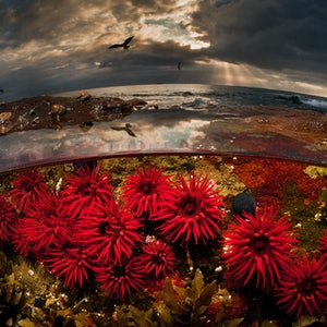 (CreativeWork) Crimson Dawn Ed. 16 of 100 by Matty Smith. photograph. Shop online at Bluethumb.