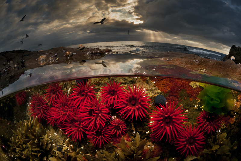 (CreativeWork) Crimson Dawn Ed. 16 of 100 by Matty Smith. #<Filter:0x00005567104f3d60>. Shop online at Bluethumb.