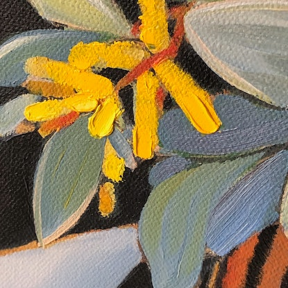 (CreativeWork) Eumundi wattle in striped vase by kirsty mcintyre. Oil Paint. Shop online at Bluethumb.