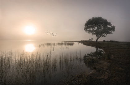 (CreativeWork) Morning  Flight by Robert Armitage. photograph. Shop online at Bluethumb.
