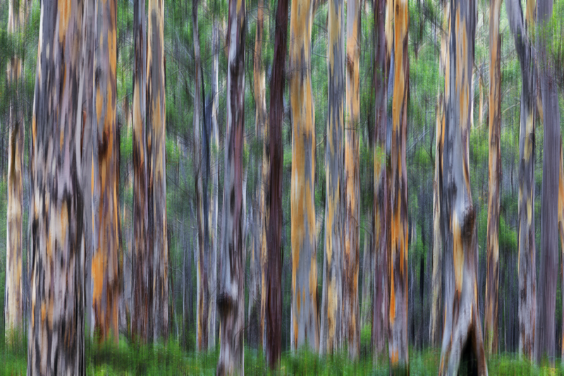 (CreativeWork) Abstract Forest by Craig Hammersley. photograph. Shop online at Bluethumb.