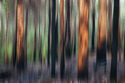 (CreativeWork) Forest Regeneration by Craig Hammersley. photograph. Shop online at Bluethumb.