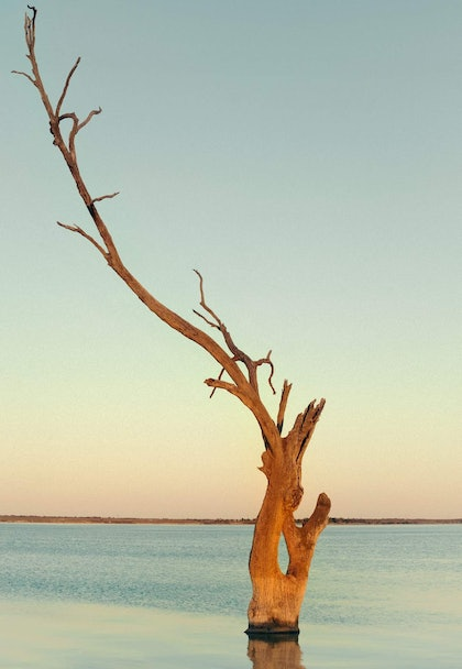 (CreativeWork) Flame Tree Study by Alex Frayne. photograph. Shop online at Bluethumb.