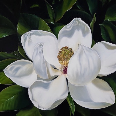 (CreativeWork) Magnolia Grandiflora by Natasha Junmanee. Oil Paint. Shop online at Bluethumb.