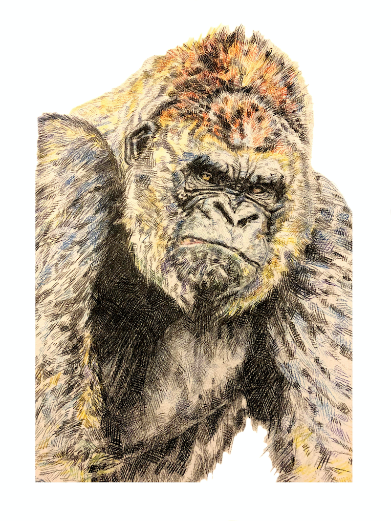 (CreativeWork) Khakee by Peter Crawford. drawing. Shop online at Bluethumb.