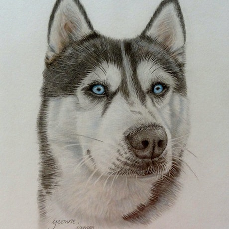 (CreativeWork) Husky by Evelyn James. Mixed Media. Shop online at Bluethumb.