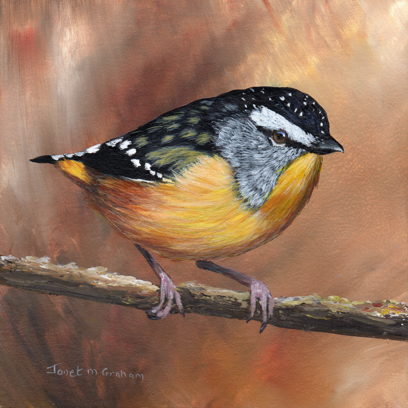 (CreativeWork) Spotted Pardalote by Janet Graham. arcylic-painting. Shop online at Bluethumb.