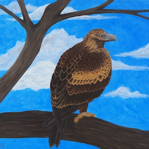 (CreativeWork) Wedge Tailed Eagle by Rebecca Westlund. arcylic-painting. Shop online at Bluethumb.