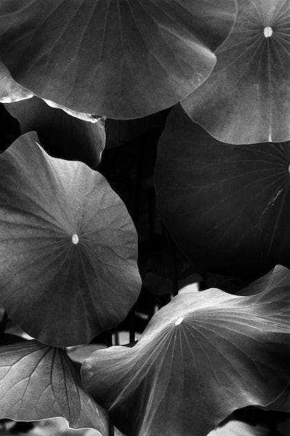 (CreativeWork) Lily Pond Detail by Alex Frayne. photograph. Shop online at Bluethumb.