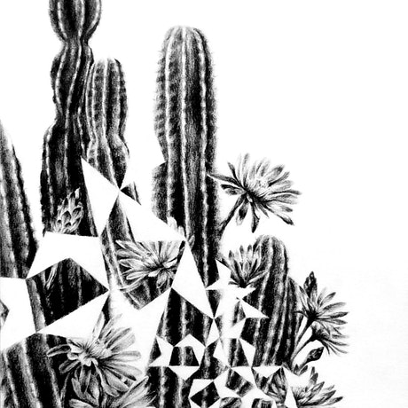 (CreativeWork) Cactus Pentigree- Framed, ready to hang   by Jahne Meyer. Drawings. Shop online at Bluethumb.