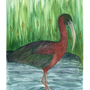 (CreativeWork) Glossy Ibis by Rebecca Westlund. watercolour. Shop online at Bluethumb.
