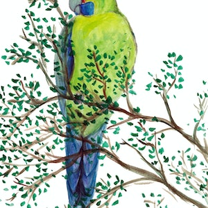 (CreativeWork) Green Rosella  by Rebecca Westlund. watercolour. Shop online at Bluethumb.