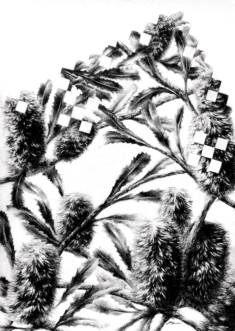 (CreativeWork) Banksia Koch Square - Framed, ready to hang  by Jahne Meyer. drawing. Shop online at Bluethumb.