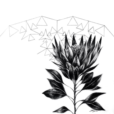 (CreativeWork) King Protea- Framed, ready to hang  by Jahne Meyer. Drawings. Shop online at Bluethumb.