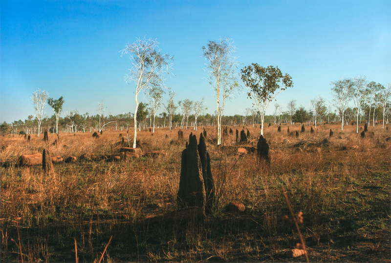(CreativeWork) Termite Hills  by Narelle Cridland. photograph. Shop online at Bluethumb.