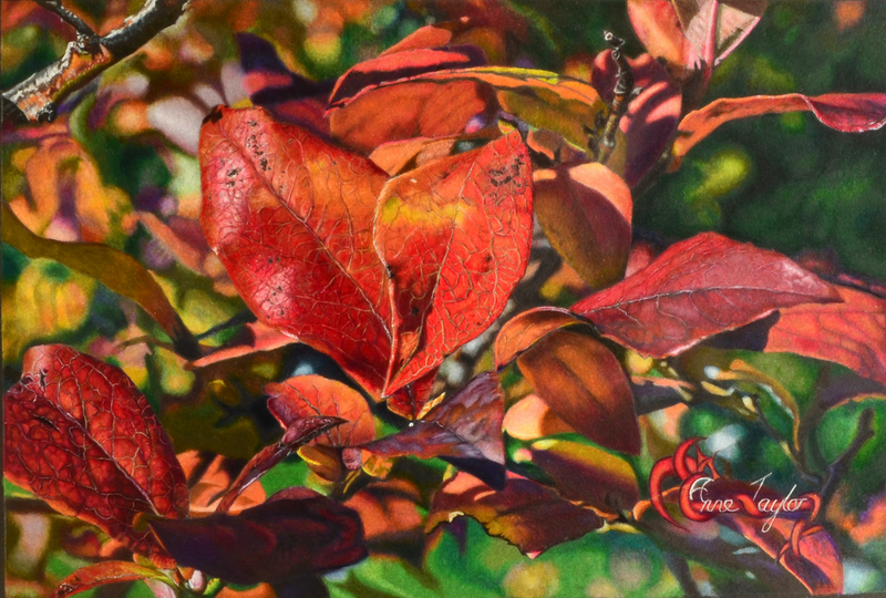 (CreativeWork) Blueberry Autumn by Anne Taylor. drawing. Shop online at Bluethumb.