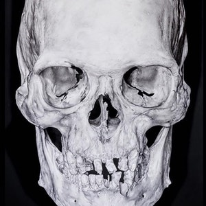 (CreativeWork) Anatomical skull by Gemma Stylz. drawing. Shop online at Bluethumb.
