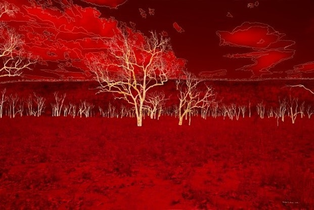 (CreativeWork) Crimson Interior by Narelle Cridland. Photograph. Shop online at Bluethumb.