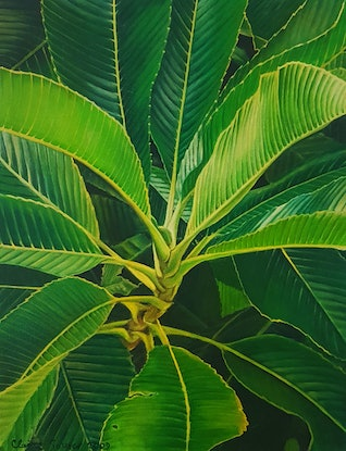 (CreativeWork) elephant apple leaves by Claire Souter. Oil Paint. Shop online at Bluethumb.