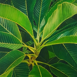 (CreativeWork) elephant apple leaves by Claire Souter. oil-painting. Shop online at Bluethumb.