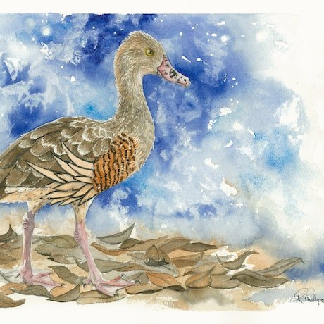 (CreativeWork) Plumed Whistling Duck by Rebecca Phillips. Watercolour. Shop online at Bluethumb.